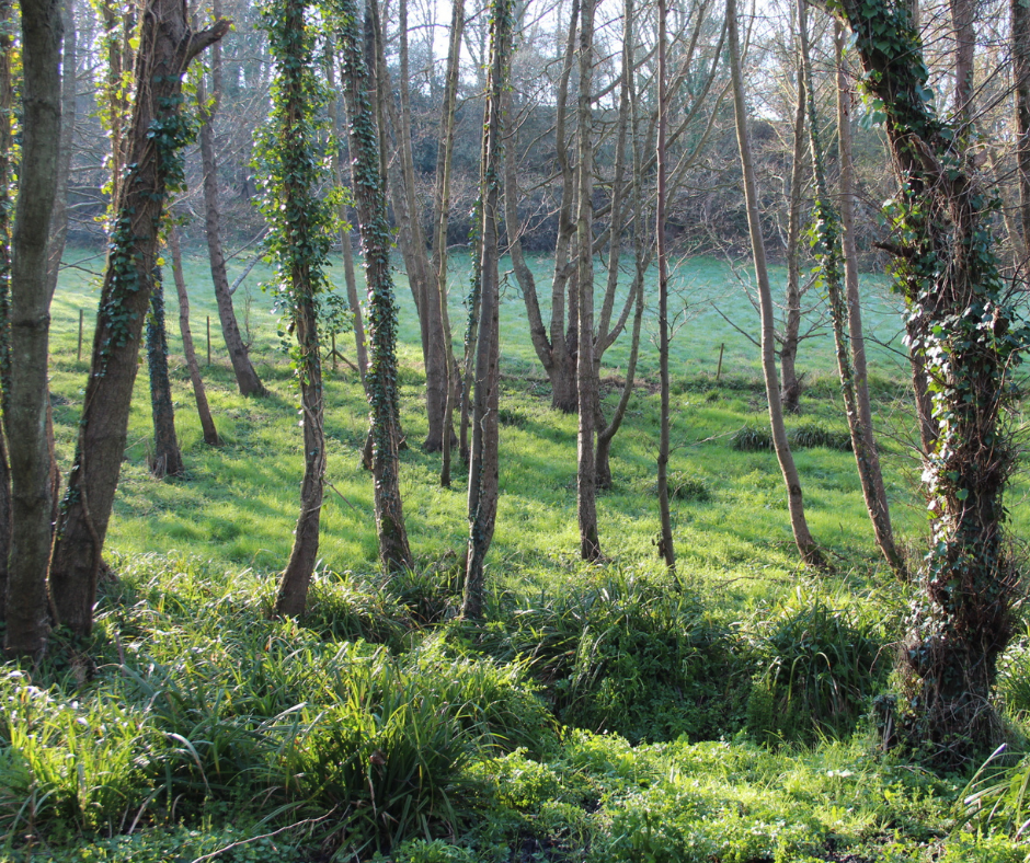 Investing in woodland - image of woodland